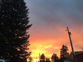 Crouch Tree Lighting at Sunset