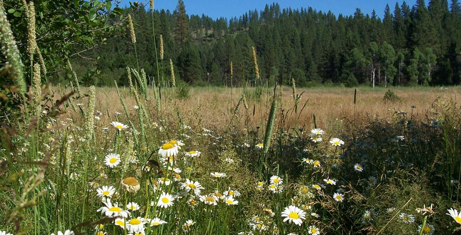Garden Valley Real Estate, Boise County Idaho, Mountain Living ...